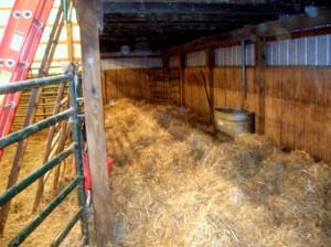 calf bed