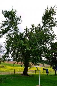 no top tree 2