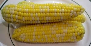 finished sweet corn