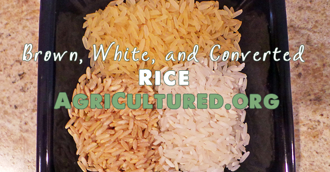 Brown Rice further Coconut Rice furthermore Img further Fluffing Rice After Cooking And Steaming also Black Rice Seed. on short grain white rice
