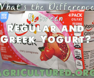 difference between regular greek yogurt featured