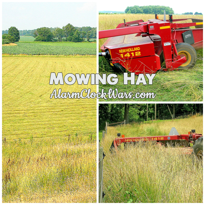 Mowing hay is a little like cutting your lawn... but on a much bigger scale!