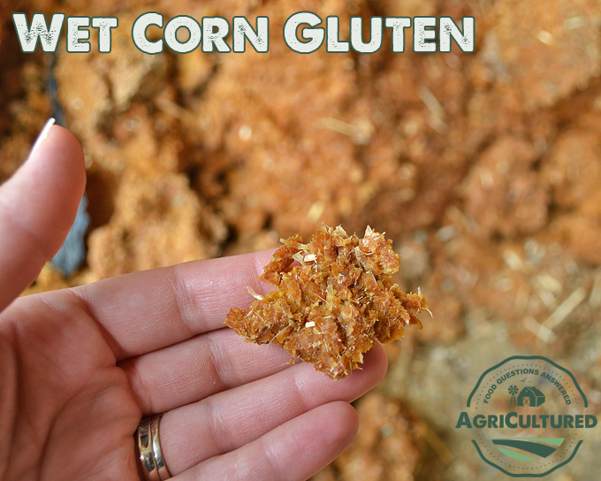 Wet corn gluten is a by-product of making high-fructose corn syrup. It is low-sugar and high-fiber, and is often part of a total mixed ration for dairy cattle.