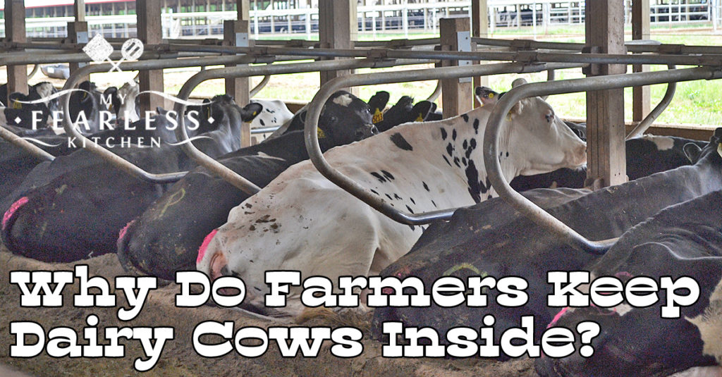Why Do Farmers Keep Dairy Cows Inside My Fearless Kitchen